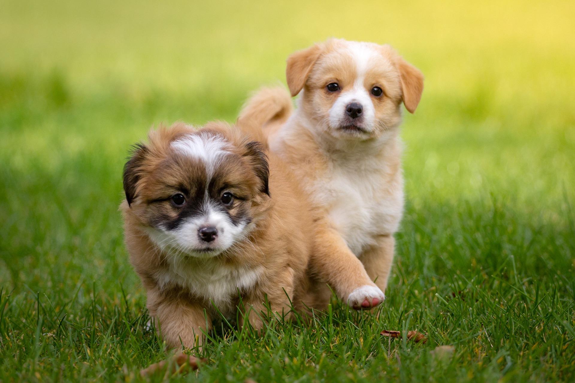 Premium Holistic Dog Care Packages
