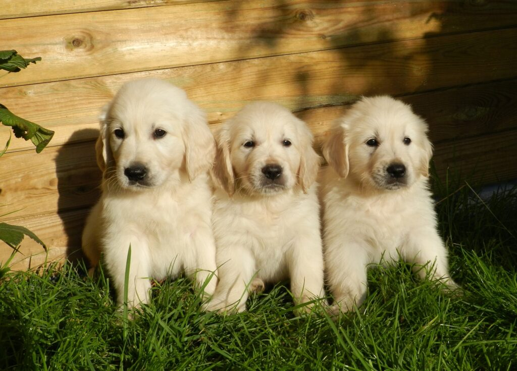 This image has an empty alt attribute; its file name is puppies-2243686_1920-1024x735.jpg