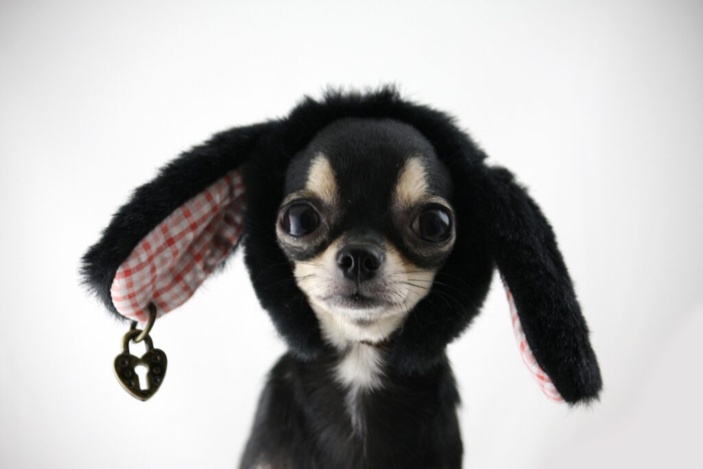 This image has an empty alt attribute; its file name is dog-3410511_1920-1024x683.jpg